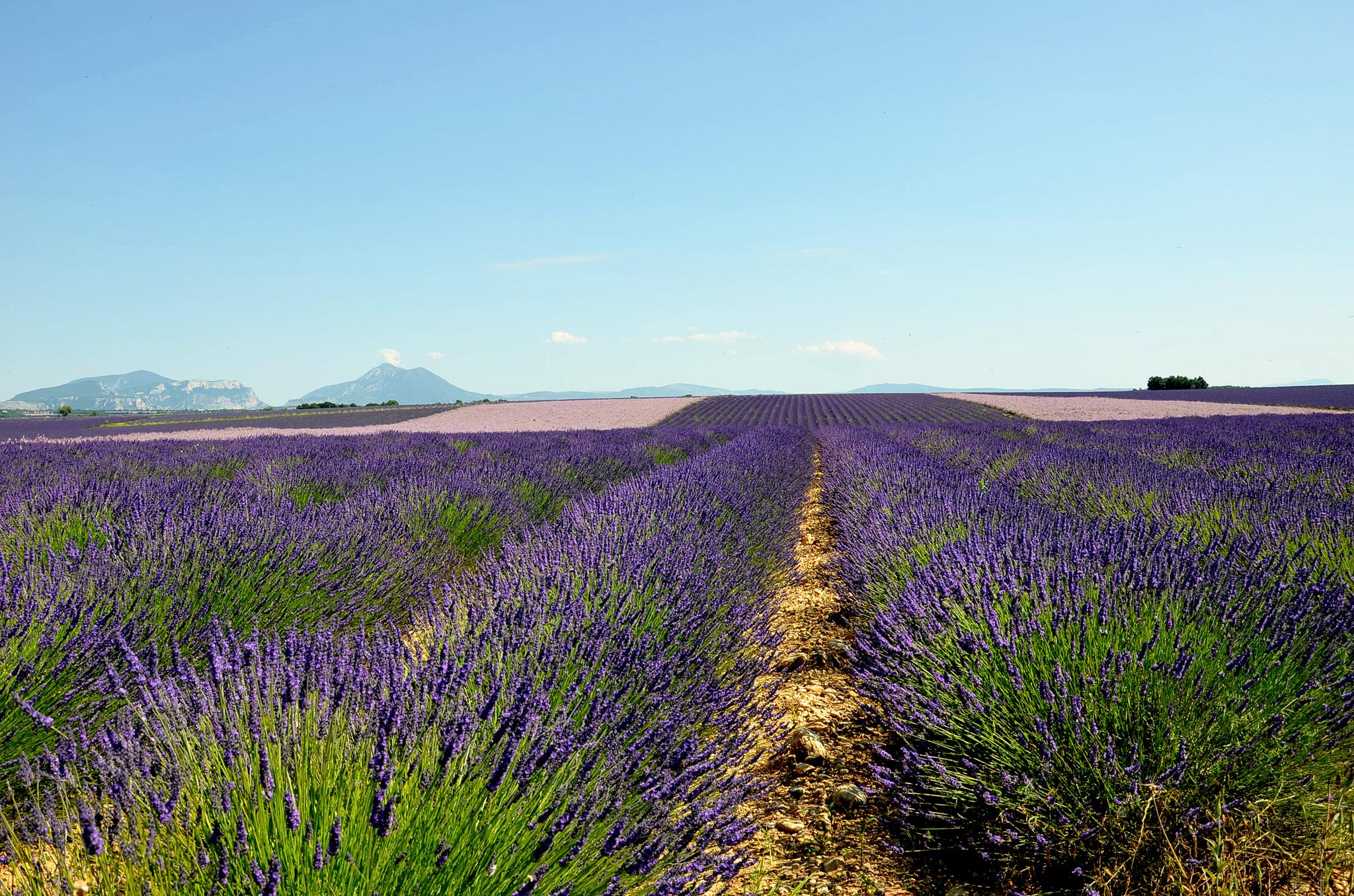 Domaine de l'Essenciel - Provence
